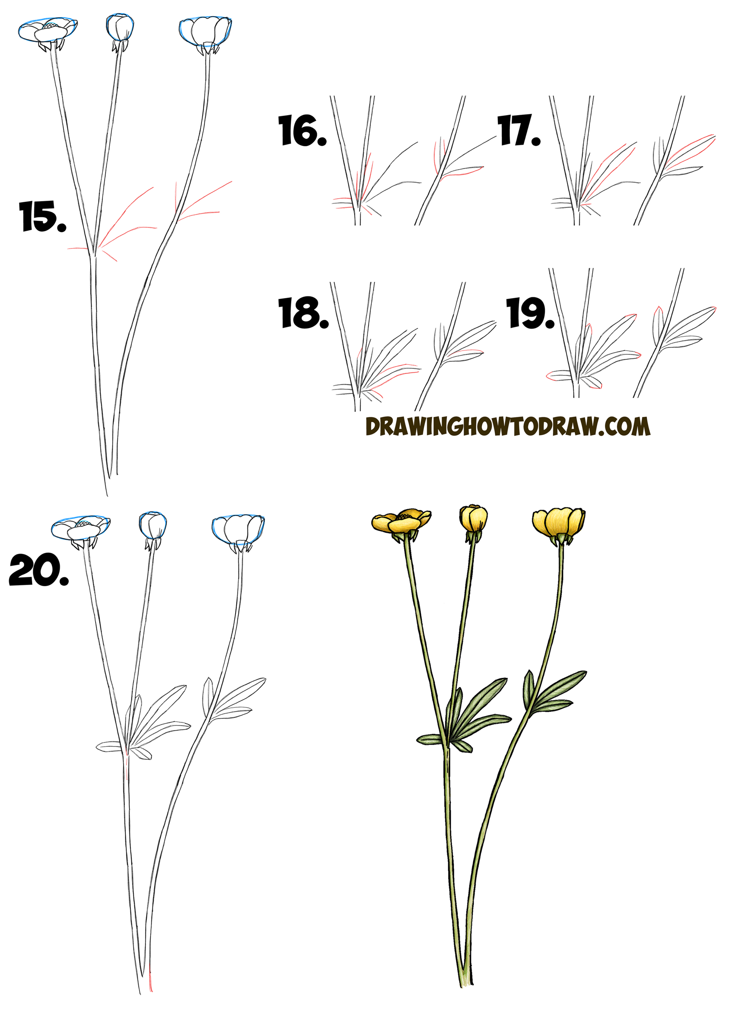 How To Draw A Buttercup Flower Step By Step Drawing