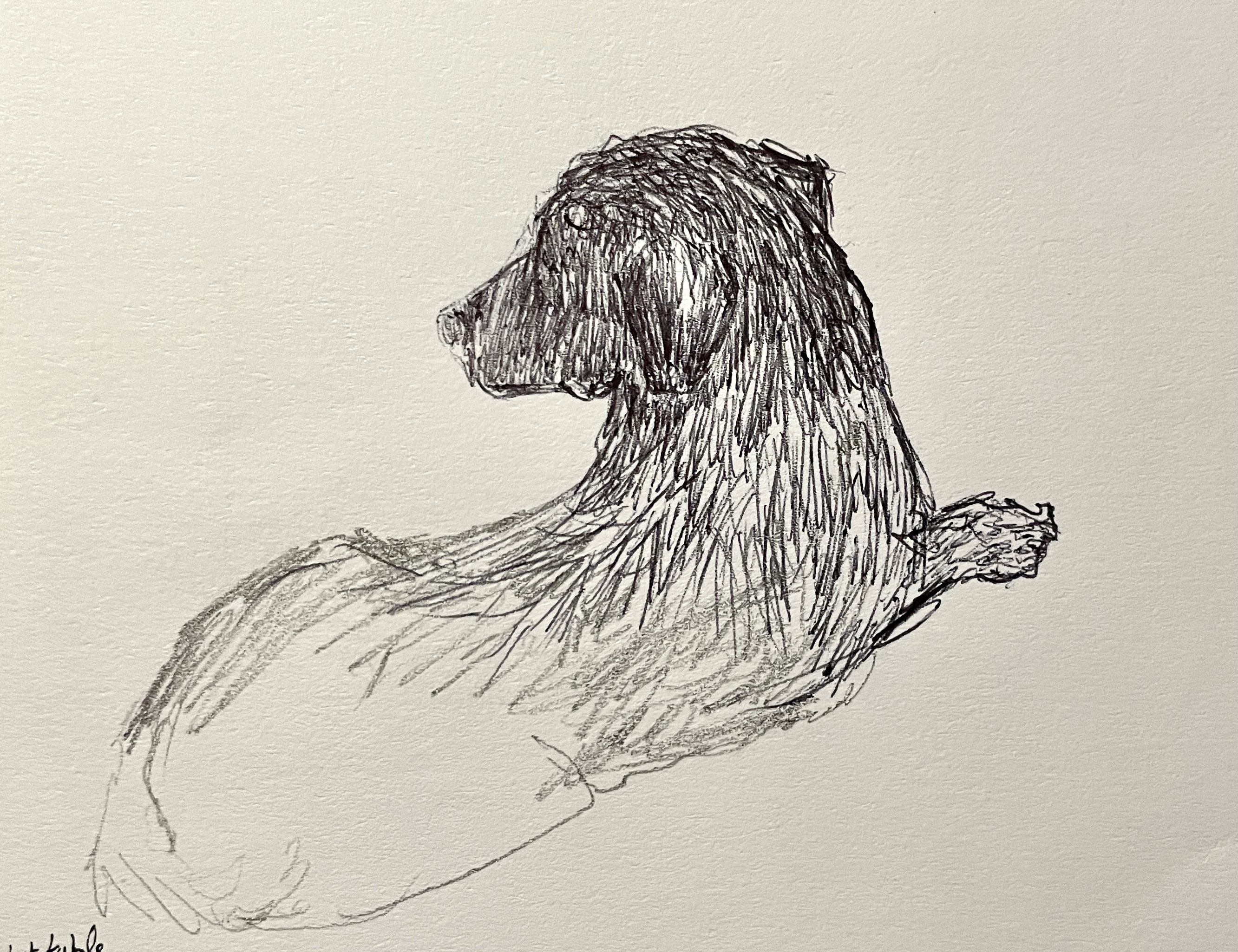 unfinished sketch of dog - Whitstable
