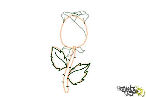 Drawing Lines Using C : How to draw a rose easy drawingnow