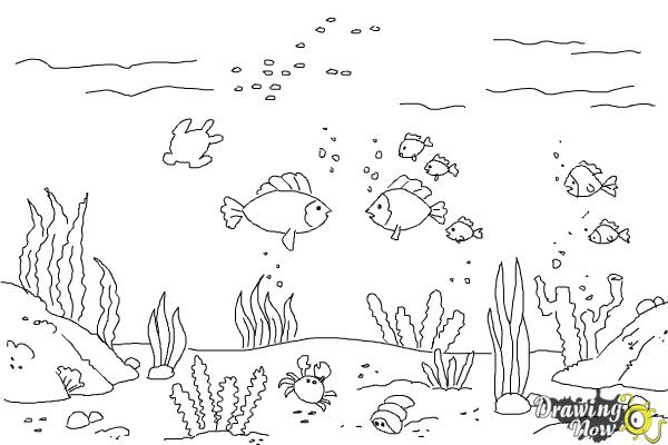 How to Draw an Underwater Scenehow to Draw an Underwater