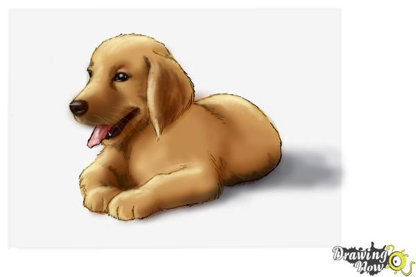 Cute Golden Retriever Puppy Drawing
