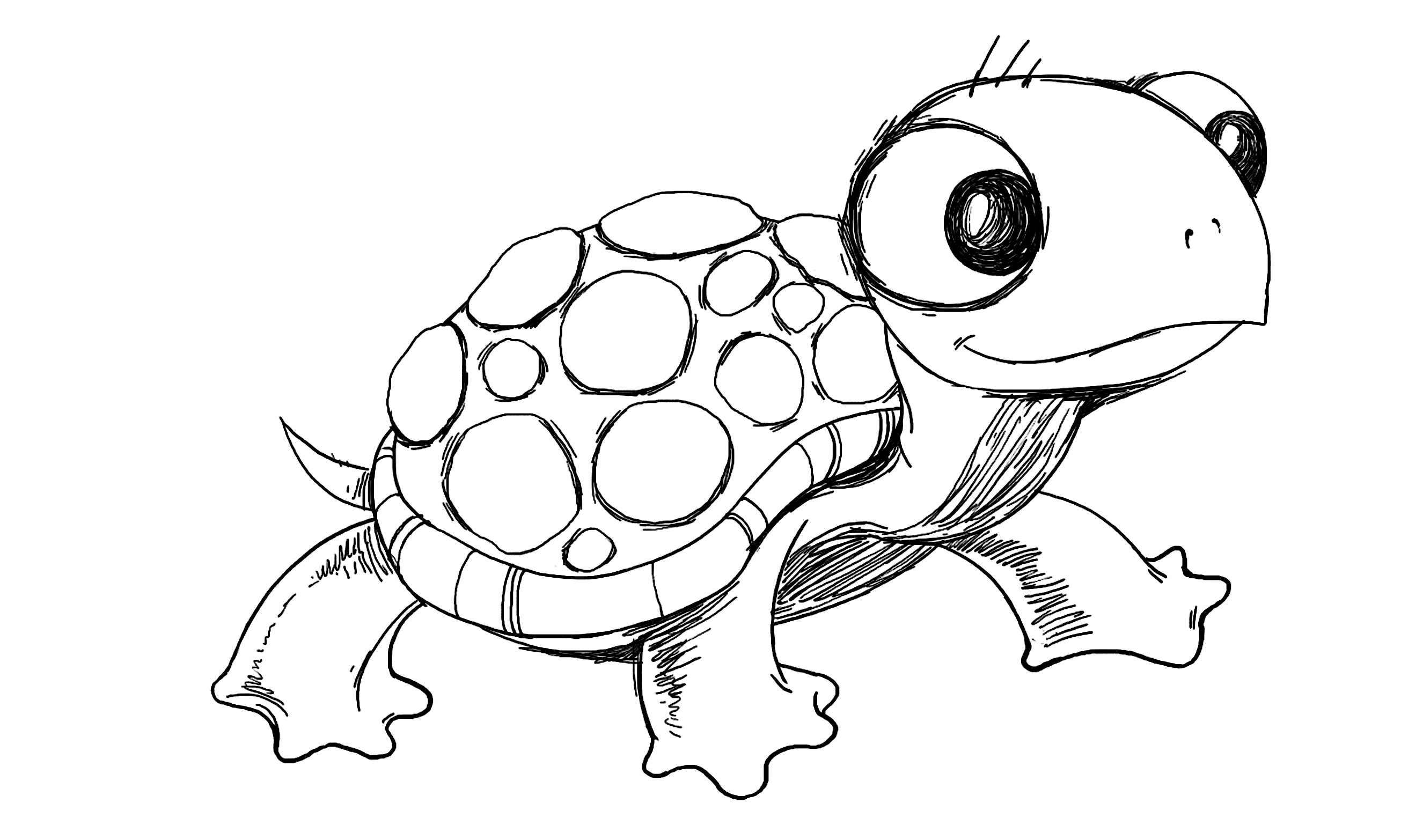 Turtle Drawing Pencil Sketch Colorful Realistic Art