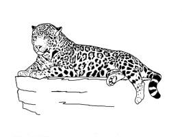 35 Jaguar Bilder Tier   Besten Bilder von ausmalbilder