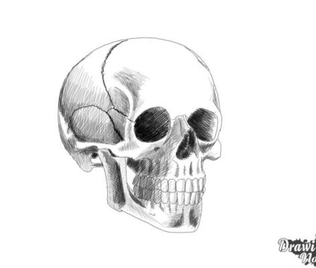 Skull Drawing Realistic