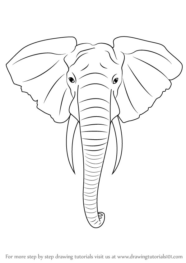 Learn How To Draw An Elephant Head Zoo Animals Step By Step Drawing Tutorials