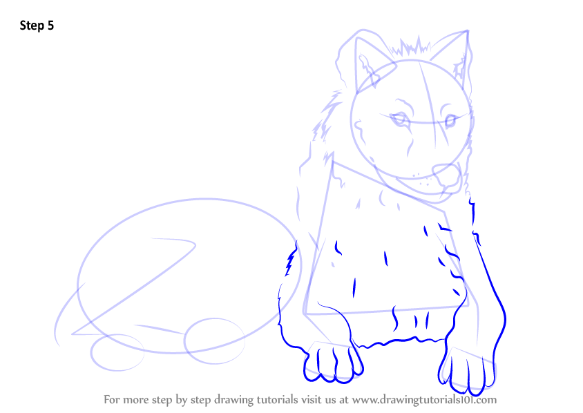 arctic wolf drawing
