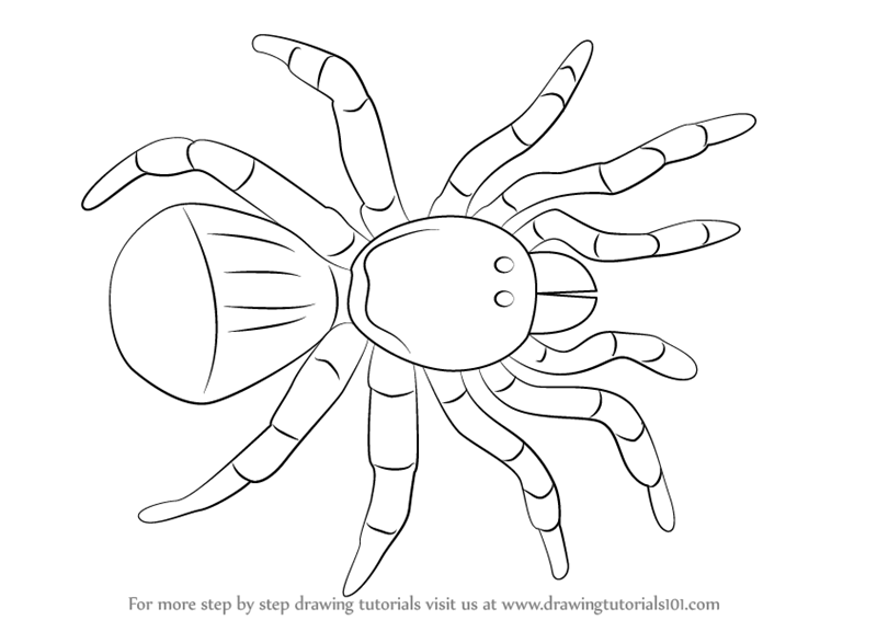 Learn How to Draw a Trapdoor Spider (Arachnids) Step by