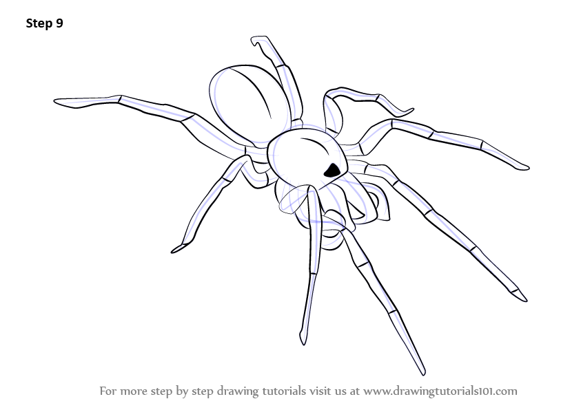 Learn How to Draw a Woodlouse Spider (Arachnids) Step by