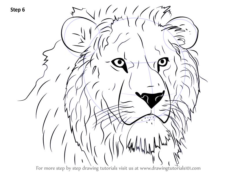 Step by Step How to Draw Lion Head : DrawingTutorials101.com