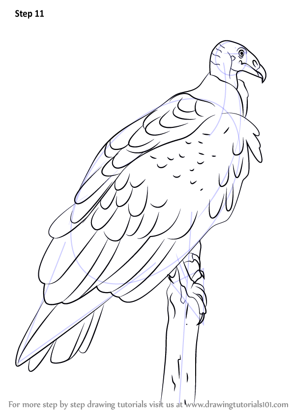 Step by Step How to Draw a Turkey Vulture