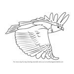 Learn How to Draw a Kestrel (Birds) Step by Step : Drawing