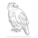 Learn How to Draw a Northern Cardinal (Birds) Step by Step
