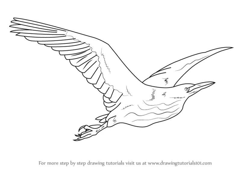 Learn How to Draw an American Bittern in Flight (Birds