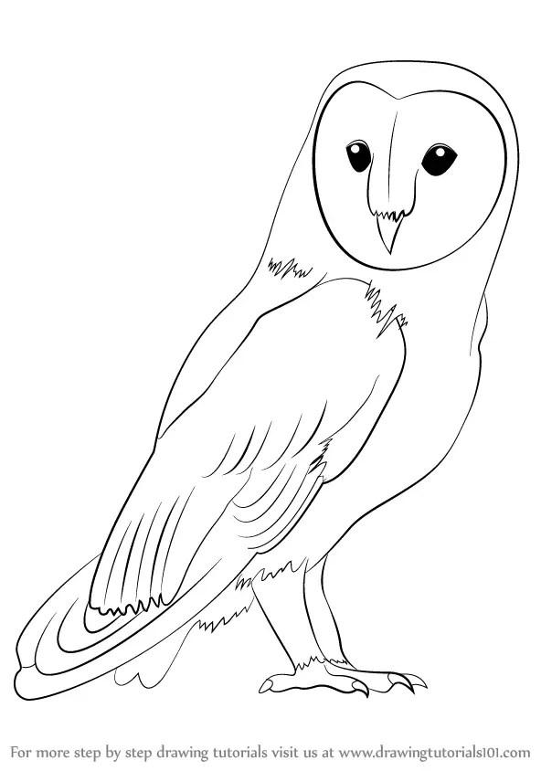 Step by Step How to Draw a Barn Owl : DrawingTutorials101.com