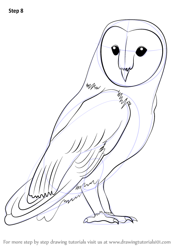 Learn How to Draw a Barn Owl (Birds) Step by Step