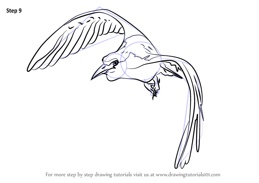 Learn How to Draw a Bird In Flight (Birds) Step by Step