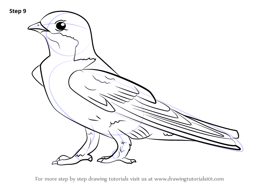 Learn How to Draw a Common House Martin (Birds) Step by