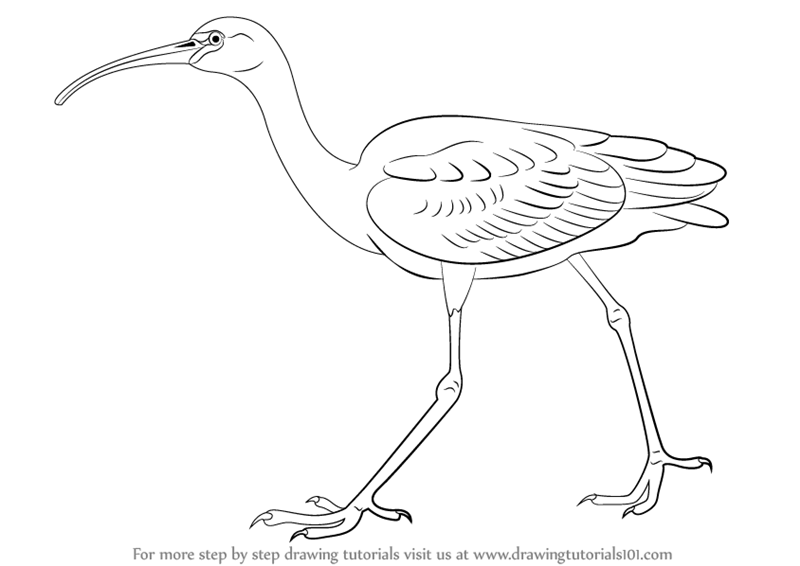 Learn How To Draw A Flamingo For Kids Animals For Kids