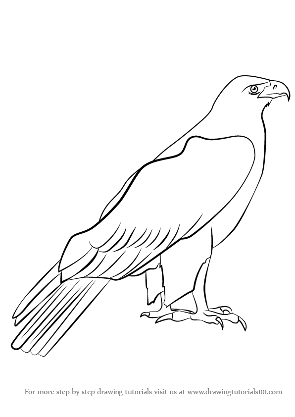 Learn How to Draw a Golden Eagle (Birds) Step by Step