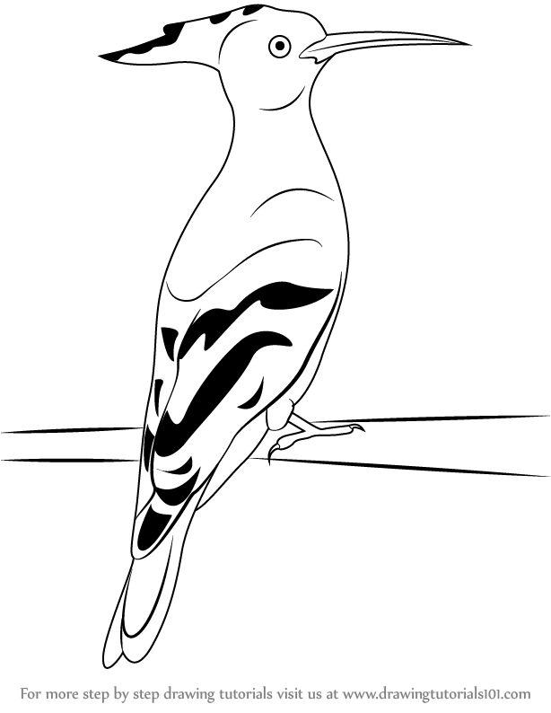 Learn How to Draw a Hoopoe (Birds) Step by Step : Drawing