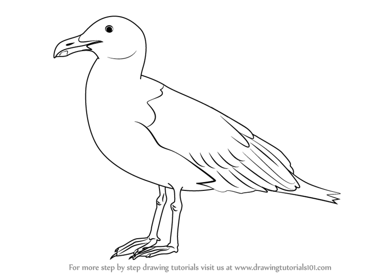 How To Draw A Seagull — Better Life