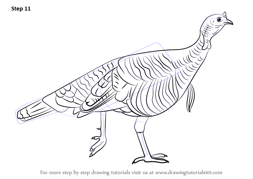 Learn How To Draw A Wood Stork Birds Step By Step