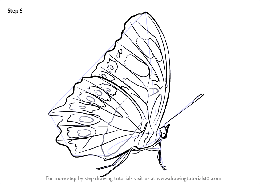 26/09/2021· very simple butterfly drawing for kids   kids drawing Learn How to Draw a Malachite (Butterflies) Step by Step ...