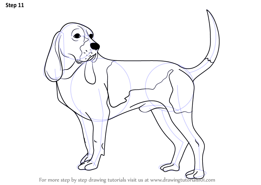 Learn How to Draw a Hound Dog (Dogs) Step by Step