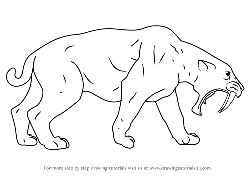 Learn How to Draw a Saber-toothed cat (Extinct Animals