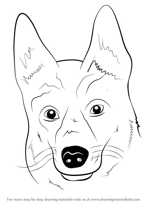 Learn How To Draw German Shepherd Dog Face Farm Animals Step By Step Drawing Tutorials