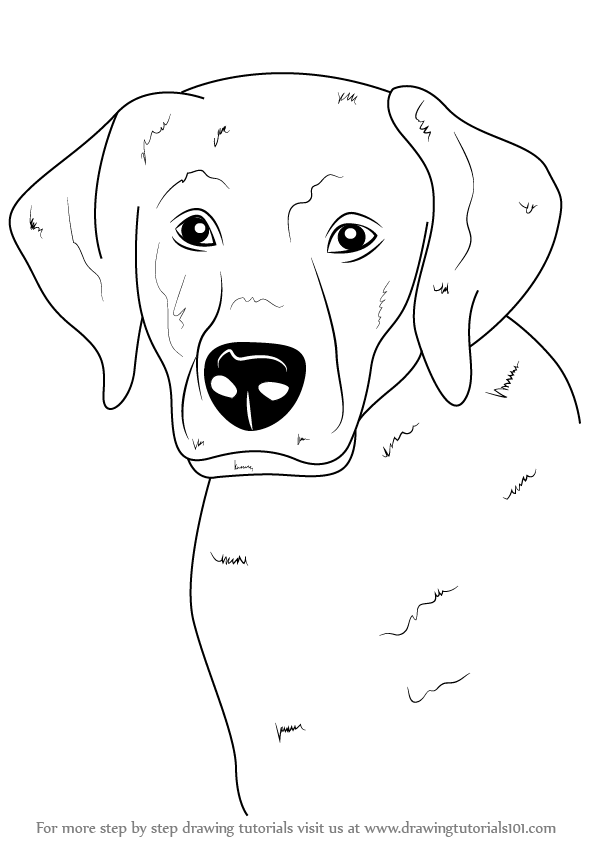 Learn How to Draw a Labrador Face (Farm Animals) Step by