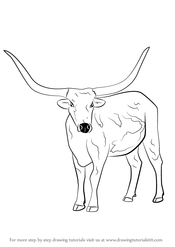 Step by Step How to Draw a Longhorn Cattle