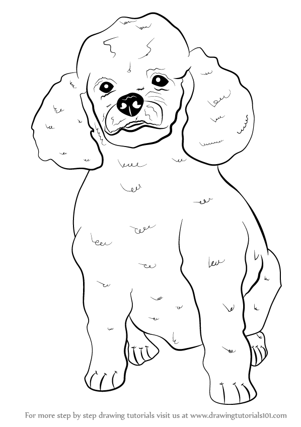 Step by Step How to Draw a Poodle Dog