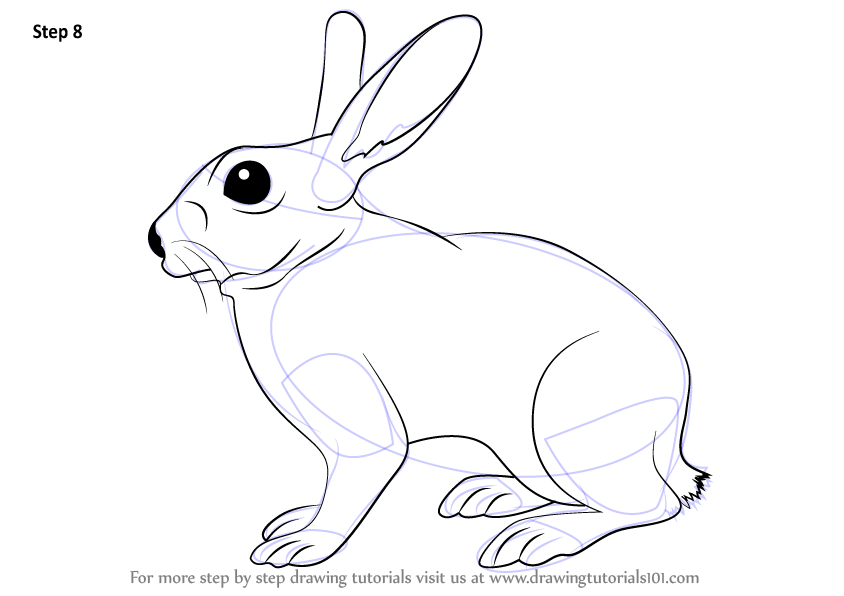 Learn How to Draw a Rabbit (Farm Animals) Step by Step
