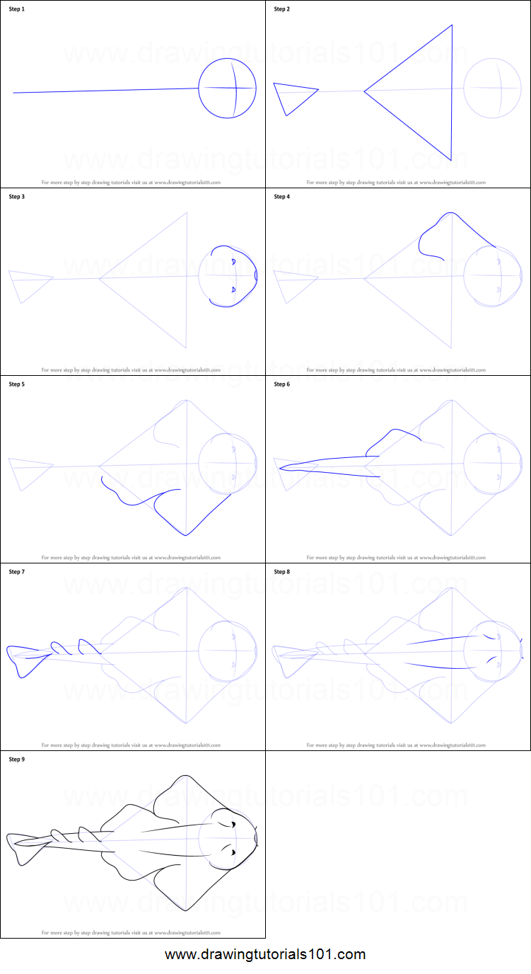 medium resolution of step by step drawing tutorial on how to draw an angel shark