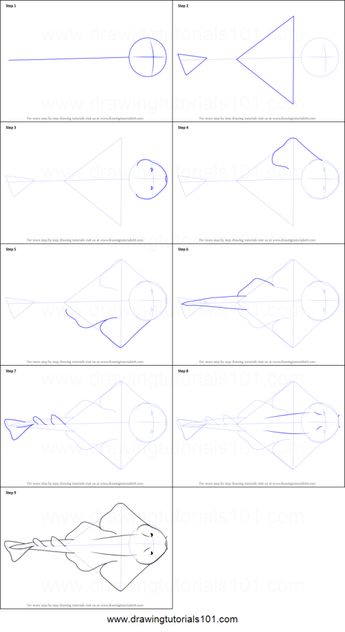 small resolution of step by step drawing tutorial on how to draw an angel shark