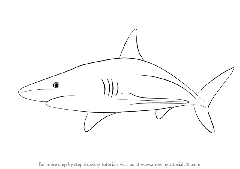 Learn How to Draw a Blacktip Shark (Fishes) Step by Step