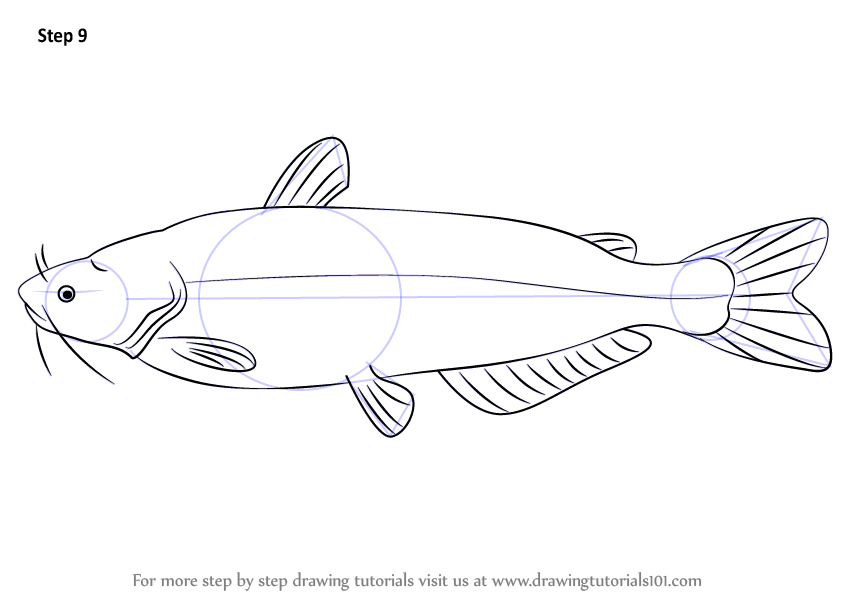 Learn How to Draw a Blue Catfish (Fishes) Step by Step