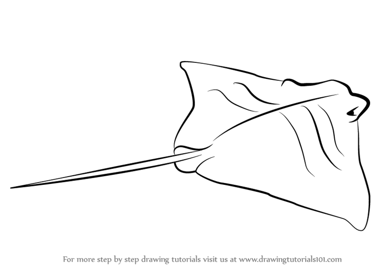Learn How to Draw a Cownose Ray (Fishes) Step by Step