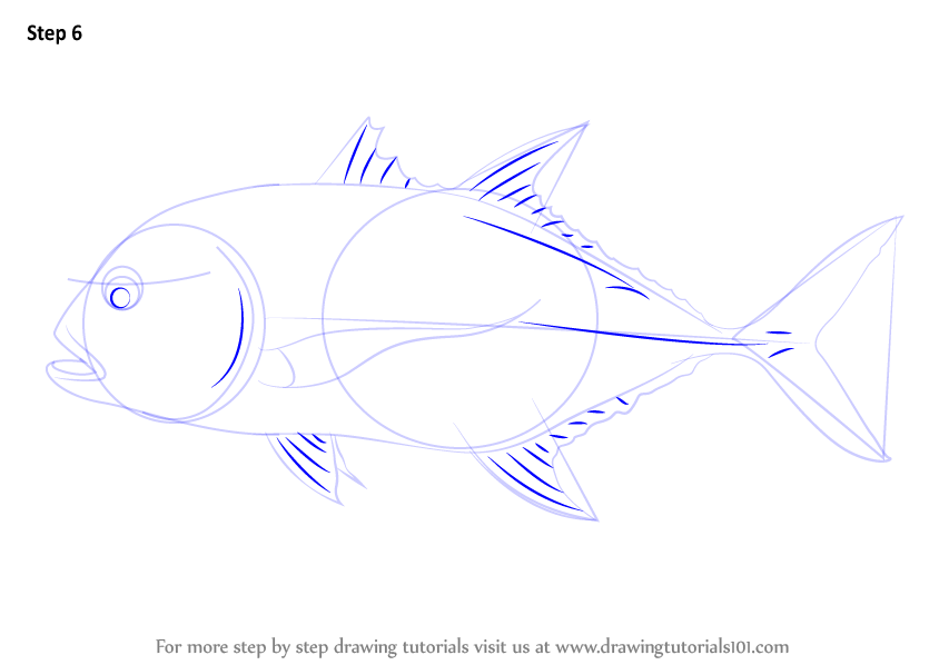Learn How to Draw a Giant Trevally Fishes Step by Step