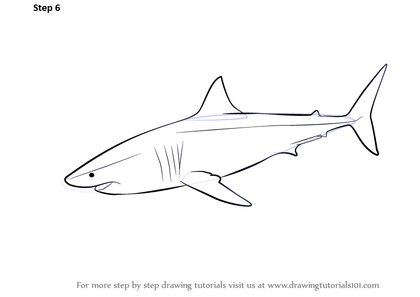 Learn How to Draw a Great White Shark (Fishes) Step by