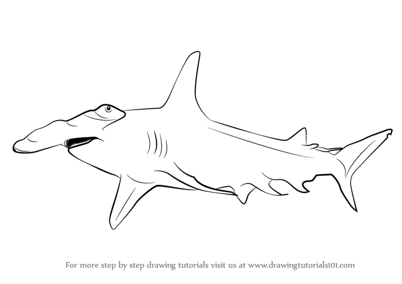 Learn How to Draw a Hammerhead Shark (Fishes) Step by Step