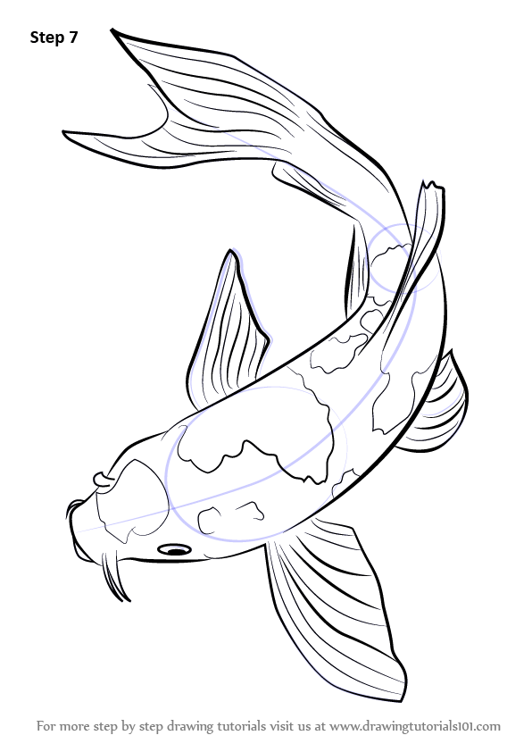 Learn How to Draw a Koi Fish (Fishes) Step by Step