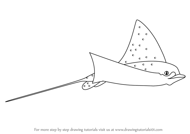 Learn How to Draw a Spotted Eagle Ray (Fishes) Step by