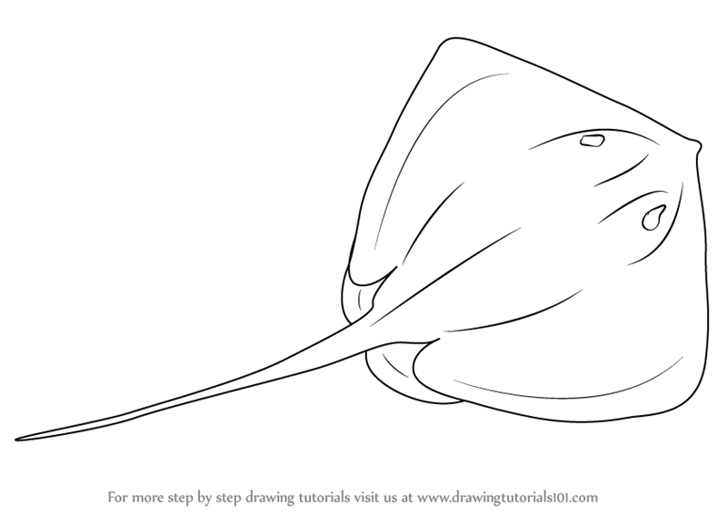 Learn How to Draw a Stingray (Fishes) Step by Step