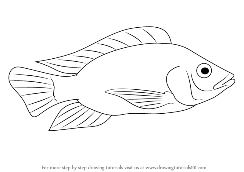 labelled diagram of a tilapia fish renault megane wiring pdf learn how to draw fishes step by drawing tutorials tutorial on