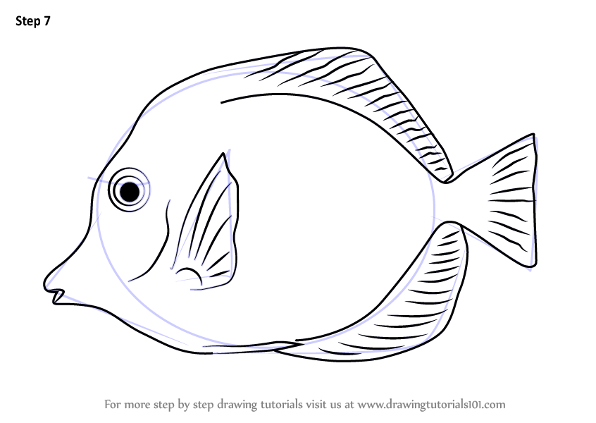 Learn How to Draw a Yellow Tang (Fishes) Step by Step