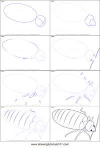 How to Draw a Bed Bug printable step by step drawing sheet ...