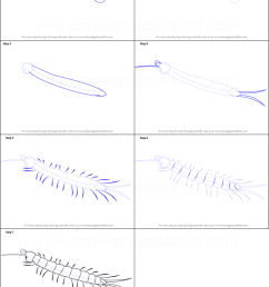 step by step drawing tutorial on how to draw a centipede [ 751 x 1103 Pixel ]