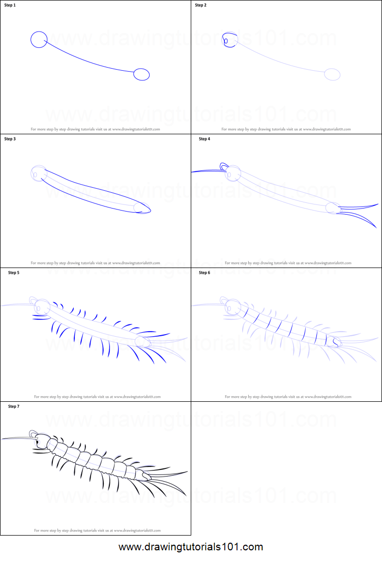 hight resolution of step by step drawing tutorial on how to draw a centipede